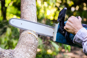 Chainsaw cutting through a tree branch on a live tree