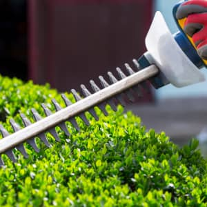 Trimming bushes with a hedge trimmer