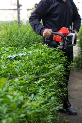 Hedge trimmer being used by a gardener