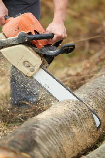 Lumberjack cutting a fallen birch tree trunk